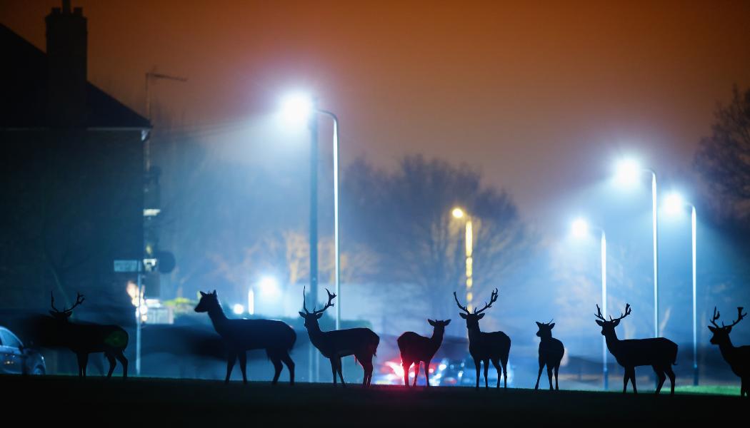 Herd of deer in a city at night